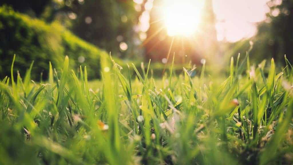 Top Five Reasons to Sell Your Home This Spring